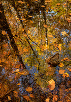 Breakneck Brook Reflection
